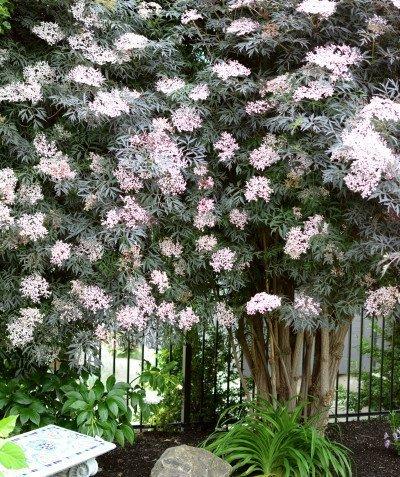 http://spatulamedia.ca/wp-content/uploads/2019/05/garden-3_1225-400x477.jpg