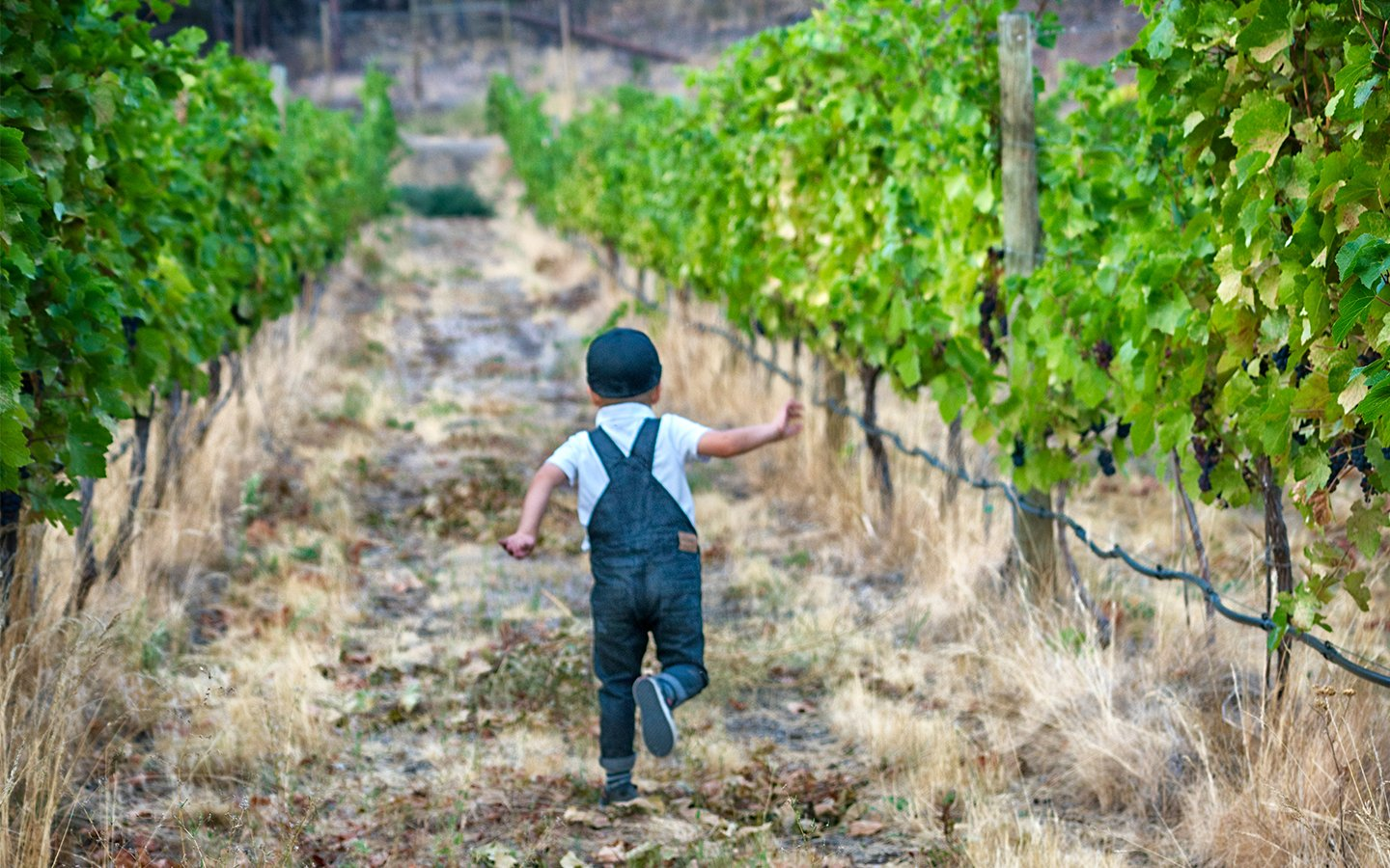 http://spatulamedia.ca/wp-content/uploads/2019/05/hugh-running-through-the-niche-vineyard.jpg