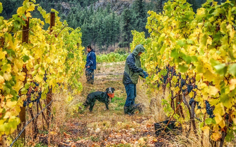 http://spatulamedia.ca/wp-content/uploads/2019/05/niche-winery.jpg
