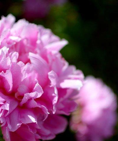 http://spatulamedia.ca/wp-content/uploads/2019/05/ok-lavender-23-400x477.jpg