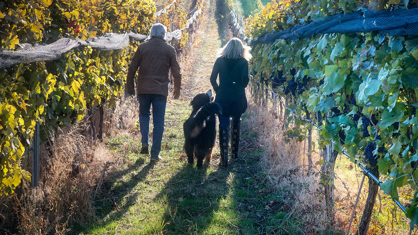 http://spatulamedia.ca/wp-content/uploads/2019/05/owners-walk-the-vines-at-mirabel-vineyards.jpg