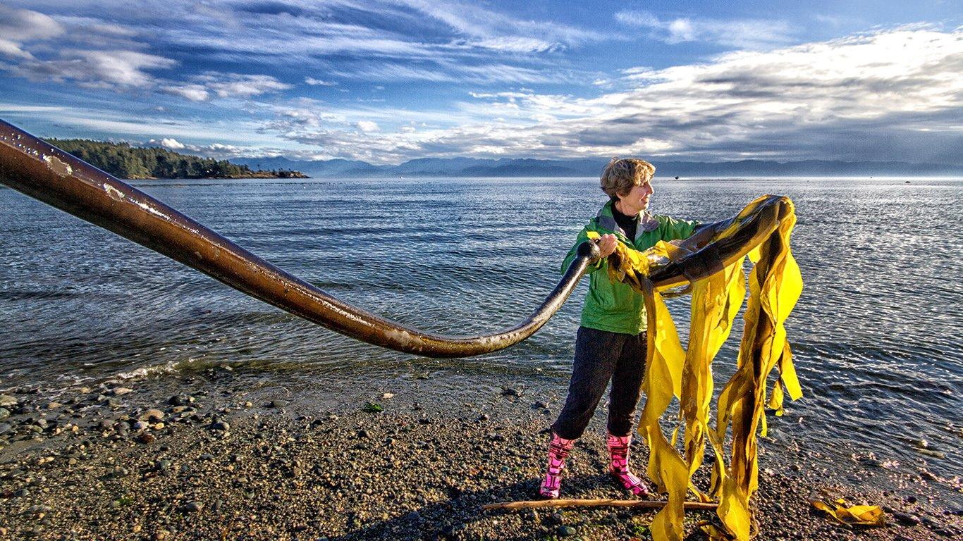 http://spatulamedia.ca/wp-content/uploads/2019/05/seaweed-lady.jpg