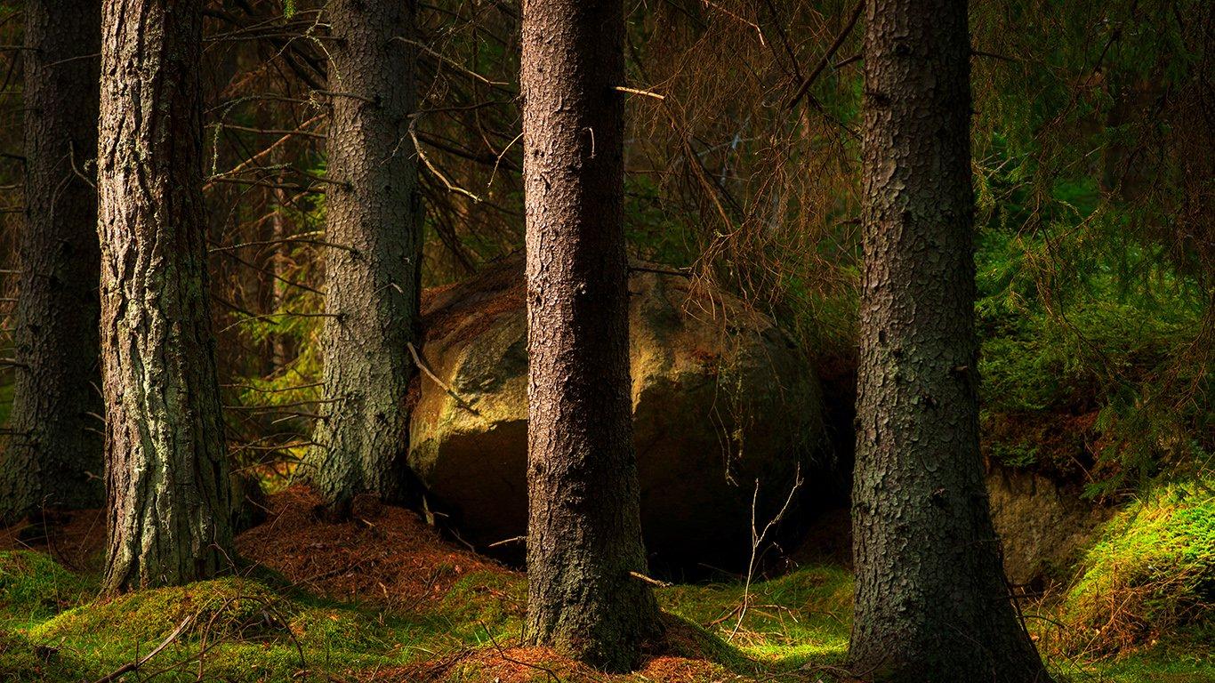 http://spatulamedia.ca/wp-content/uploads/2019/05/trees.jpg