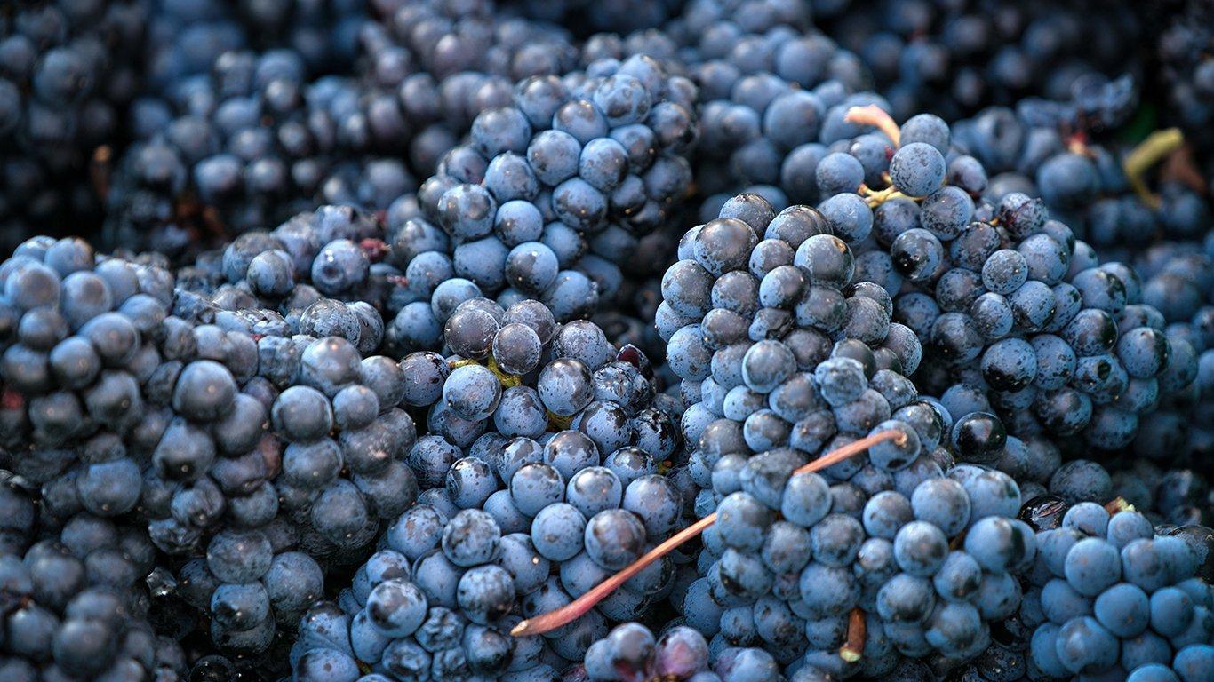 https://spatulamedia.ca/wp-content/uploads/2019/05/mirabel-vineyards-grapes.jpg
