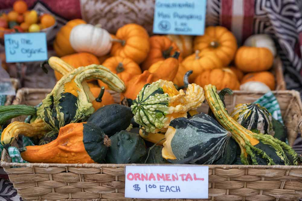 https://spatulamedia.ca/wp-content/uploads/2019/05/ornamental-squash.jpg